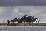 Baumgruppe auf Insel Bock