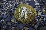 Schnee auf Grasbüschel am Strand