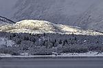 verschneite Bäume auf Haaköya