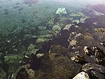 coast with Seaweed and Sea Urchins