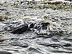 wave breaking on stone