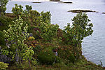 late summer on island Guraholmen