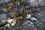Seaweed and shells on drift line