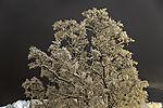 Schnee auf Birke am Abend