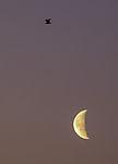 Mond und Möwe