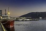 Möwen nahe Fischtrawler in Tromsö