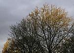 morning sun on trees