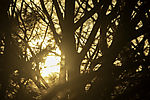 evening sun in trees