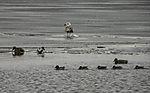 Wasservögel auf Eis der Alster