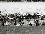 Wasservögel auf Teich Am Weiher