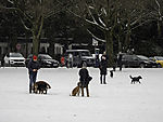 dogs on Alster meadow in winter
