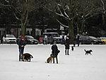 Hundeauslauf auf Alsterwiese im Winter