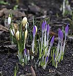 Frühling kommt im Winter
