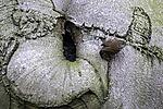 Zaunkönig vor Baumhöhle, Troglodytes troglodytes