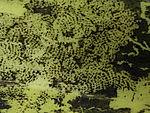 Schneckenfraßspuren