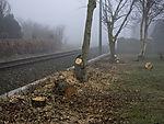 Baumfällung an der Bahn
