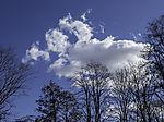weiße Wolke über Bäumen