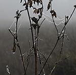 eisiger Nebelmorgen