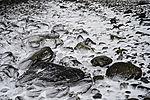 Schnee auf Steinen am Strand