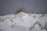 Gras im Schneefall