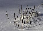 Pflanzen im Schnee