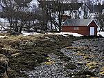 lot of Seaweed on drift line of Tromso