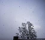 snow fall in Tromso