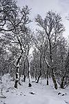 Schnee in der Taiga