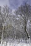 snow in taiga