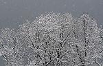 Schneefall und Bäume