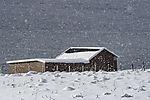 Schneefall am Sandnessund