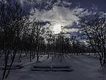 Schneewald in Tromsö