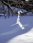 Schnee schmilzt im Baum