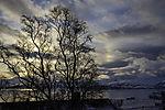 Nebensonne und Baum