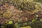 colourful sea ground in Sandnessund