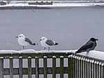 Vögel schwarz und weiß