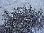 ice crystals on dried puddle