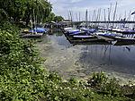 pollen on lake Alster