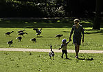 mother with infant and Greylag Geese