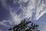 Federwolken über Baum