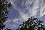 Federwolken über Bäumen