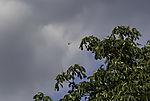 Libelle über Baum