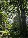Sommer im Eppendorfer Park in Hamburg