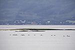 many sea paddlers near Tromso