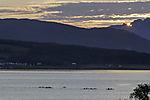 Meerespaddler bei Tromsö am Abend