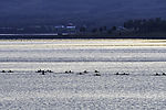 sea paddlers near Tromso in evening