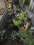 front garden with plants in boots