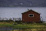 Grey Herons at old boat house, Ardea cinerea