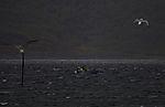 angler boat in rough sea