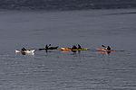 sea paddlers in Sandnessund